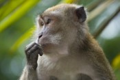 Petition to stop the Mauritius monkey trade