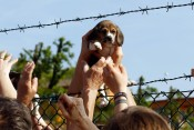 UK breeder of animals for labs to expand